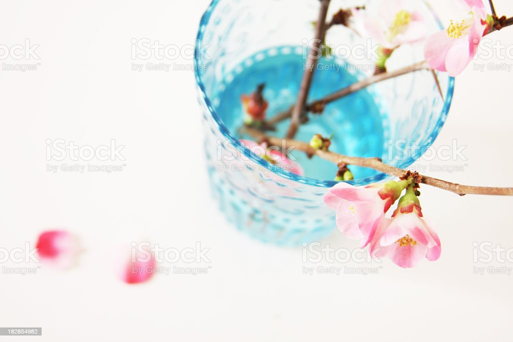 Pink blossoms in blue vase stock photo