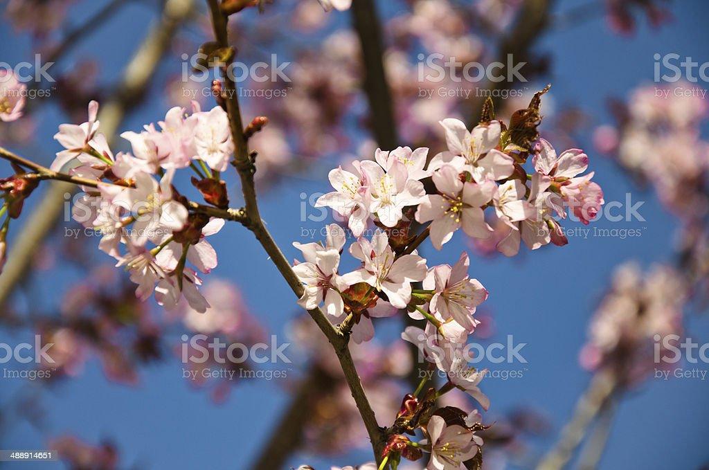 Flores cor de rosa foto de stock royalty-free