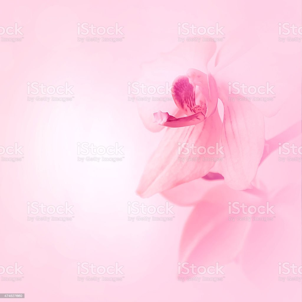 Pink blurred background with orchid flowers stock photo