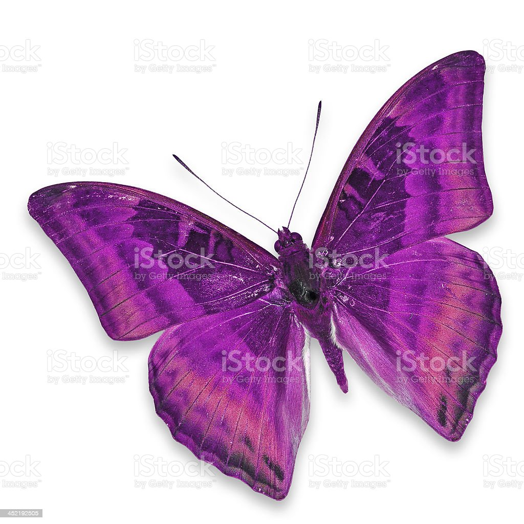 Pink butterfly royalty-free stock photo