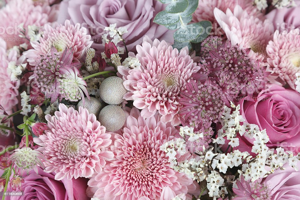 Pink chrysanthemum, roses and astrantia flowers background stock photo