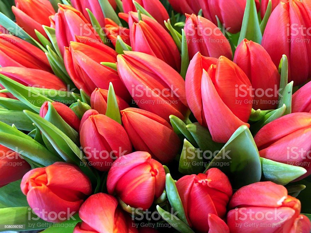 Pink color Tulip Arrangement stock photo