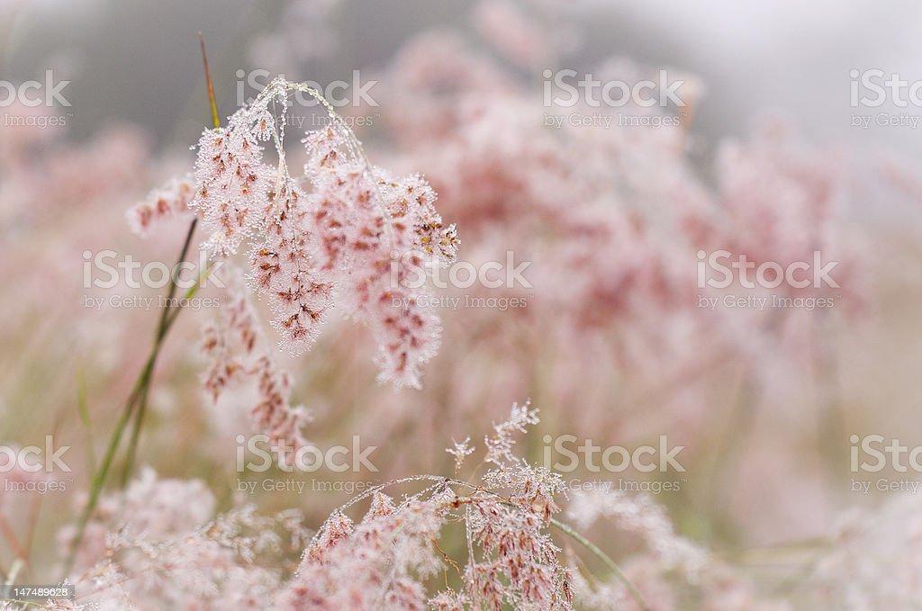 Pink crystals royalty-free stock photo