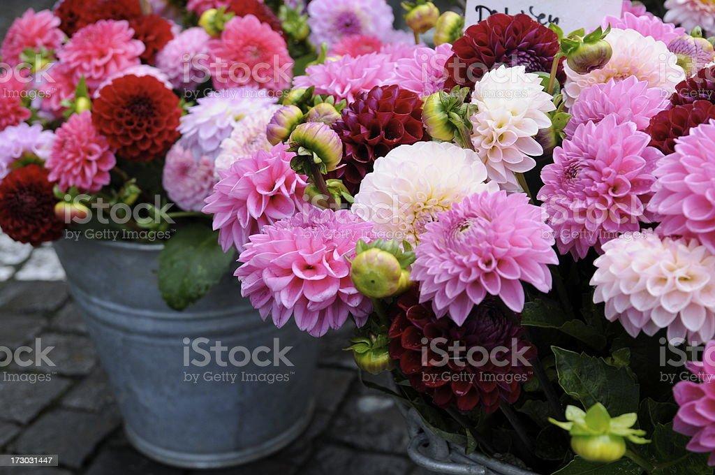 pink dahlia series at flower market royalty-free stock photo