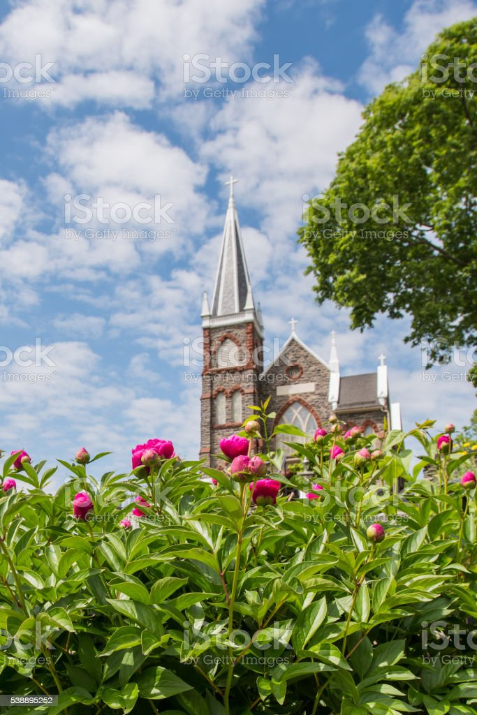 Pink Dahlias Bloom in front of Saint Peters Church stock photo