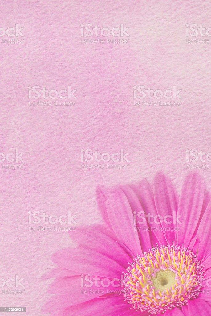 Pink Daisy Background royalty-free stock photo