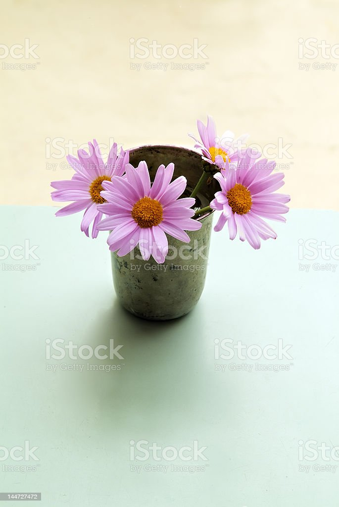 pink daisyes royalty-free stock photo