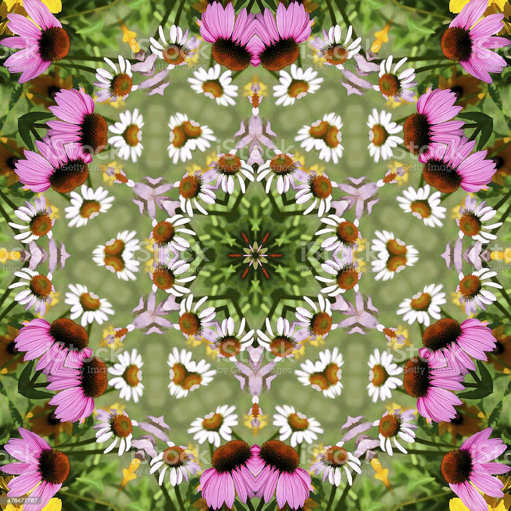 Pink Echinacea Coneflower Kaleidoscope royalty-free stock photo