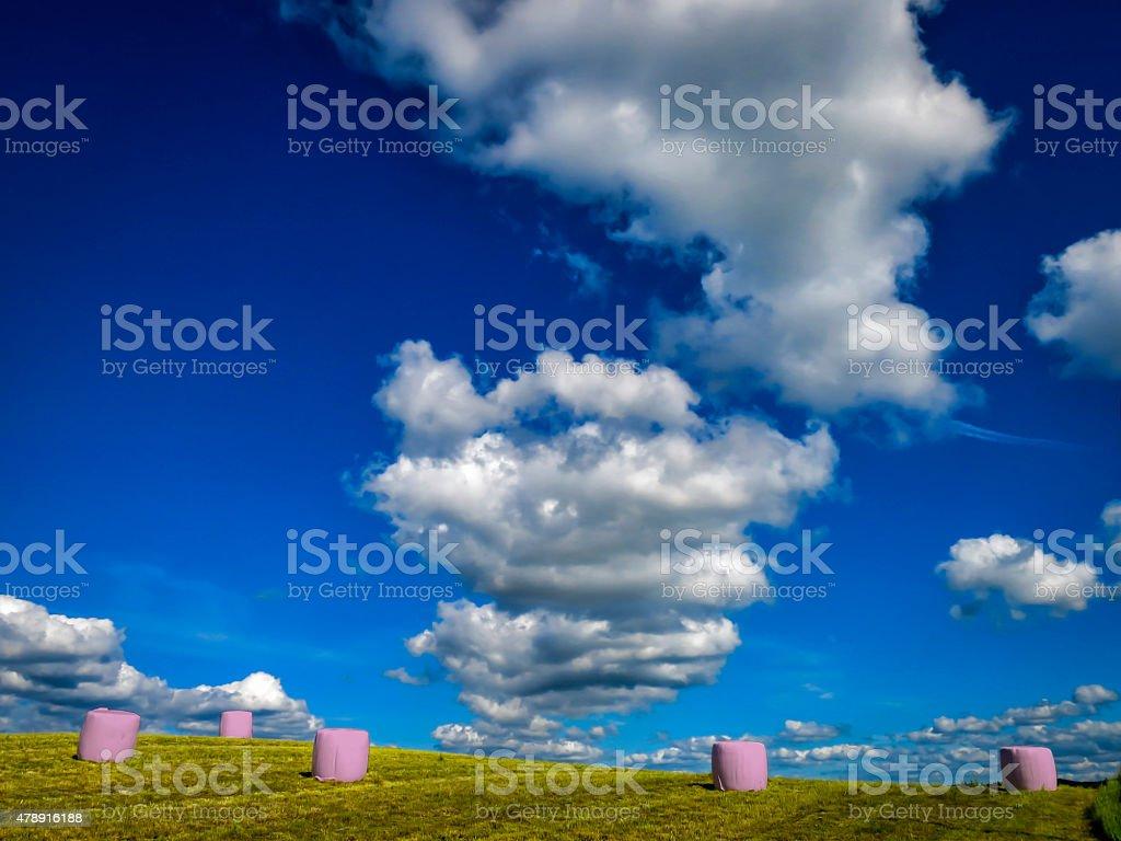 Pink ensilage balls against vibrant blue sky stock photo