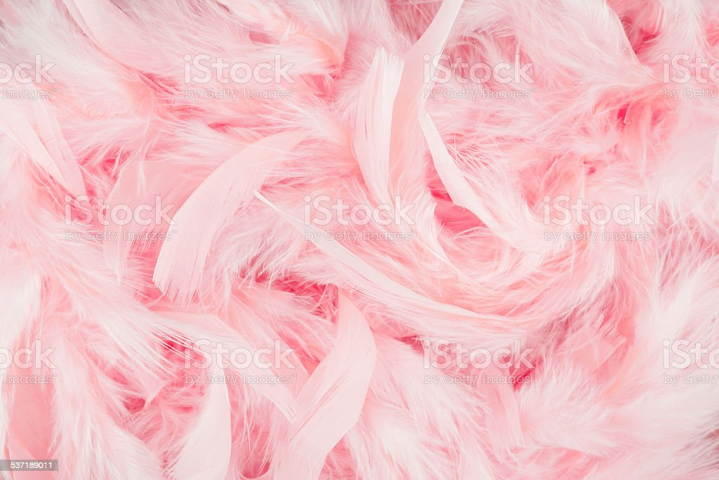 Pink feathers background stock photo