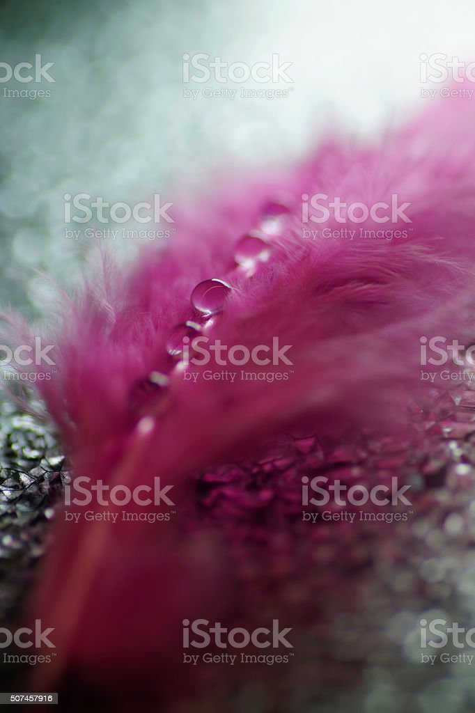 Pink feathers With Dew, bokeh light background stock photo