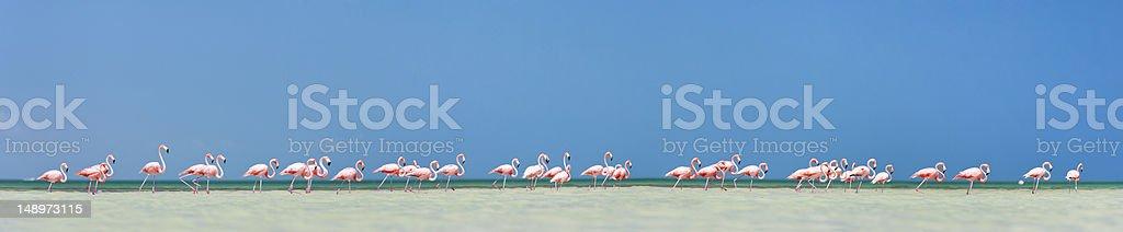 Pink flamingos panorama stock photo