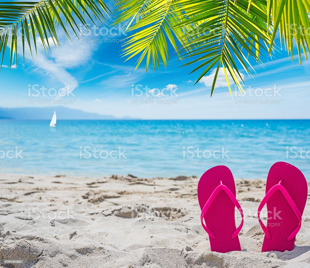 pink flip flops under a palm tree stock photo