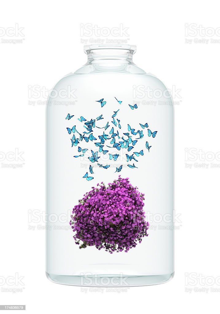 pink flower and a lot of butterflies in the bottle. stock photo
