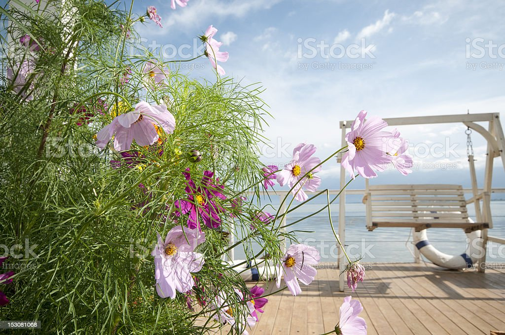 Pink flower and blue sea platform stock photo