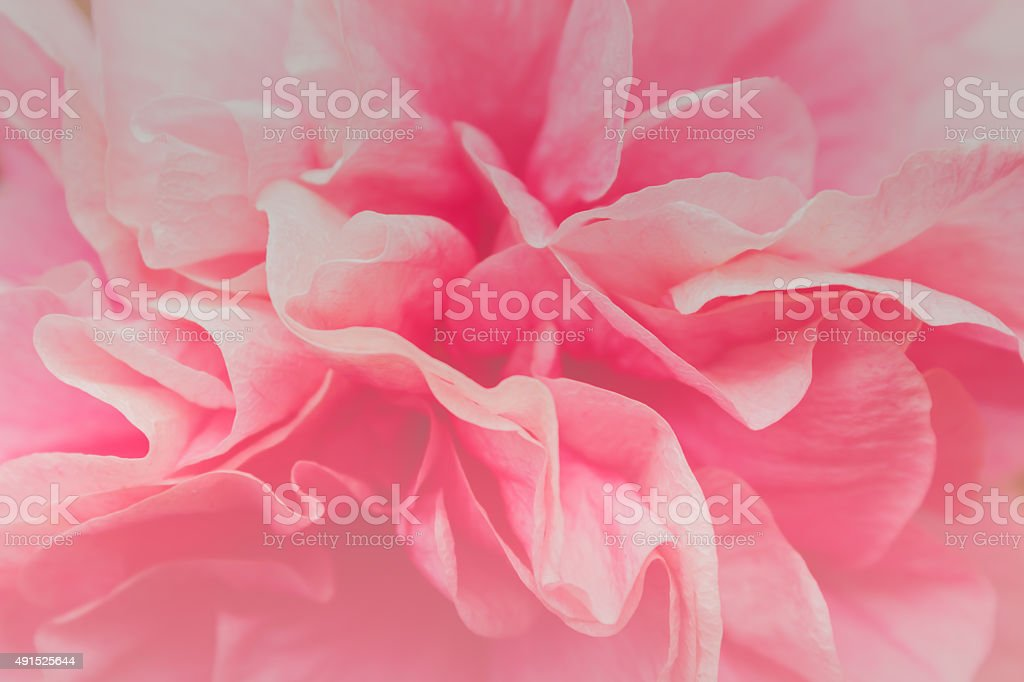 pink flower backgrounds stock photo