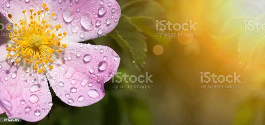 Pink flower banner stock photo