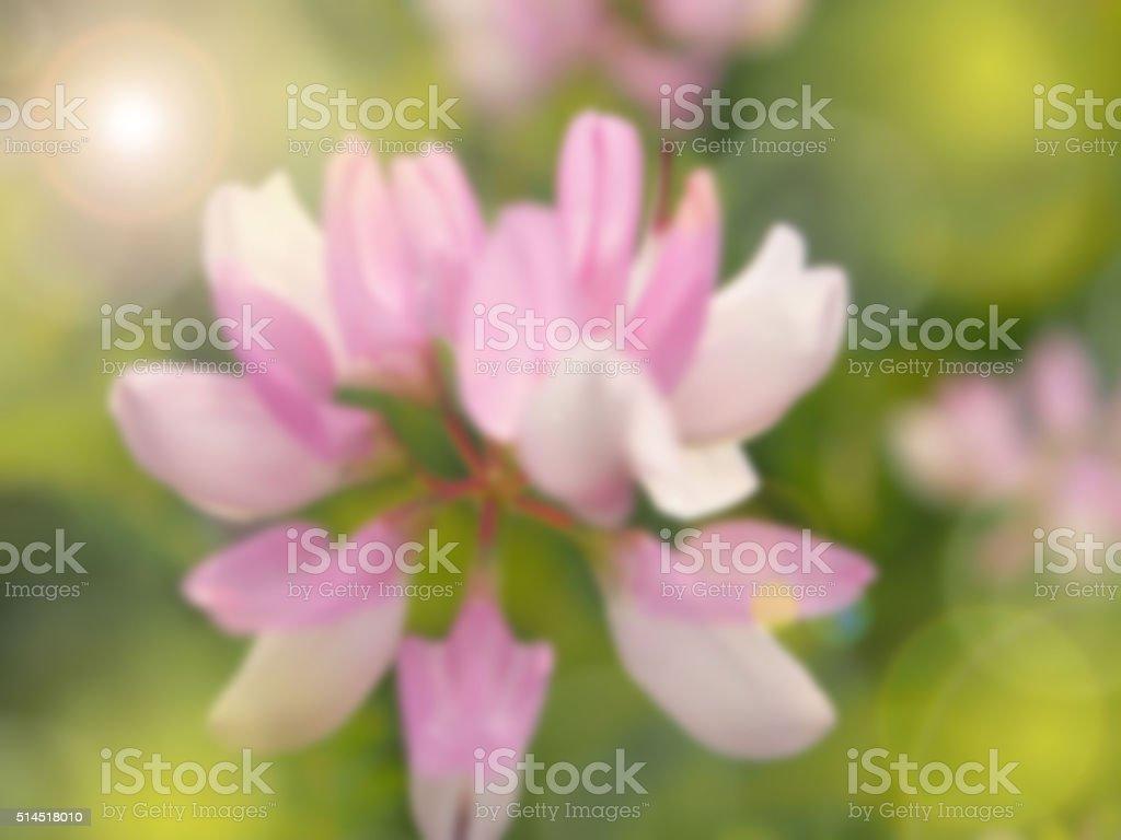 pink flower blurred background stock photo