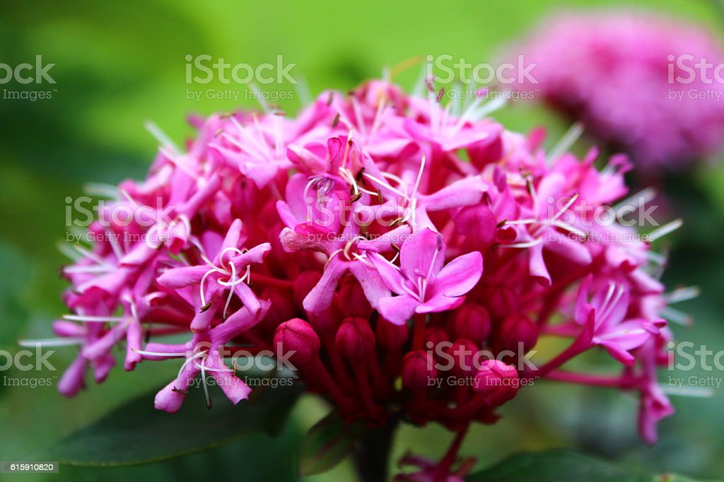 Pink Flower - Canon 600D - Close Up stock photo
