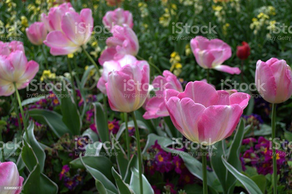 Pink Flower Garden Bed stock photo