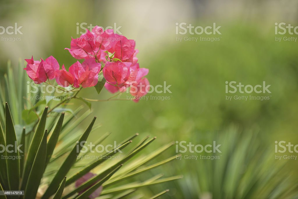 pink flower& green background stock photo