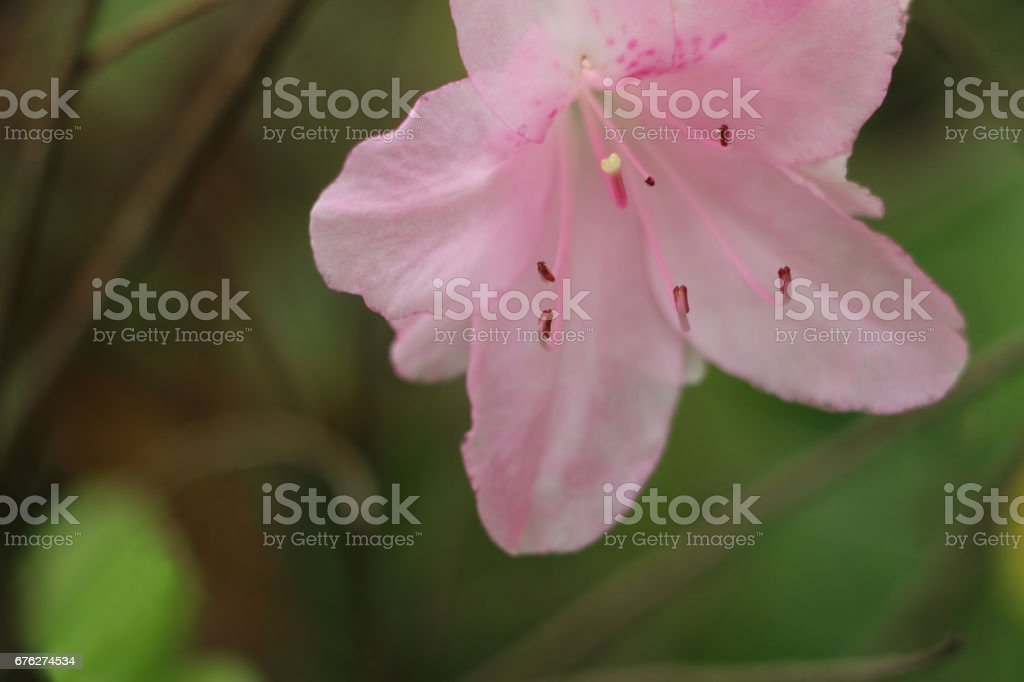 Pink flower in bloom stock photo