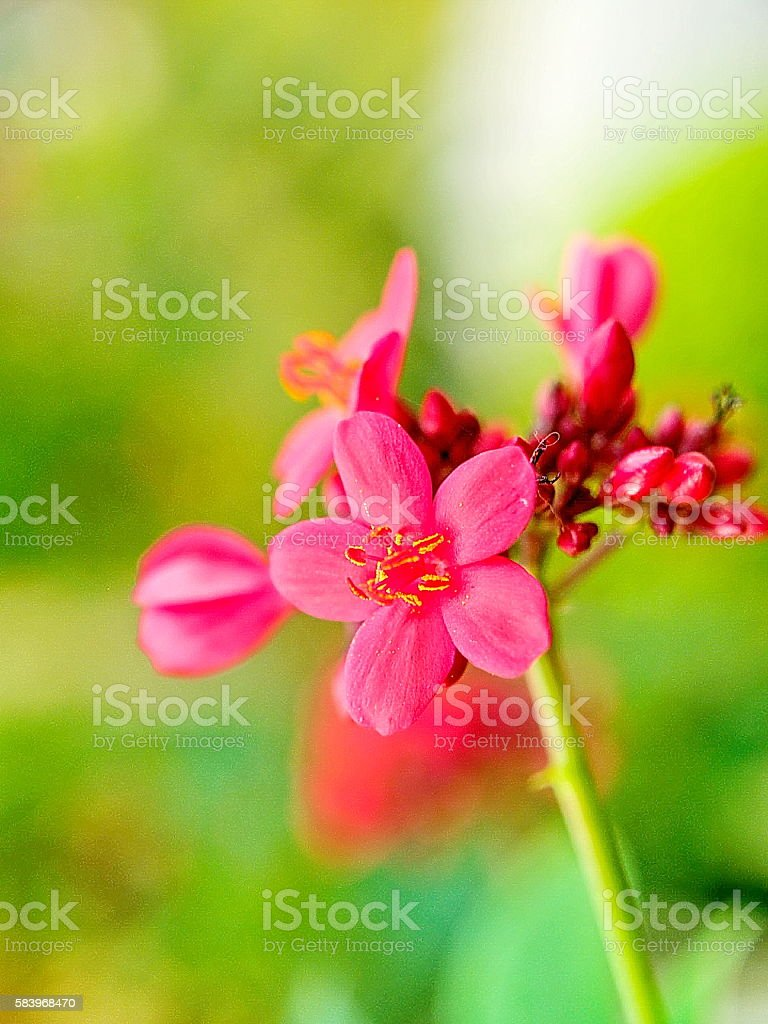 Pink flower in botanic stock photo