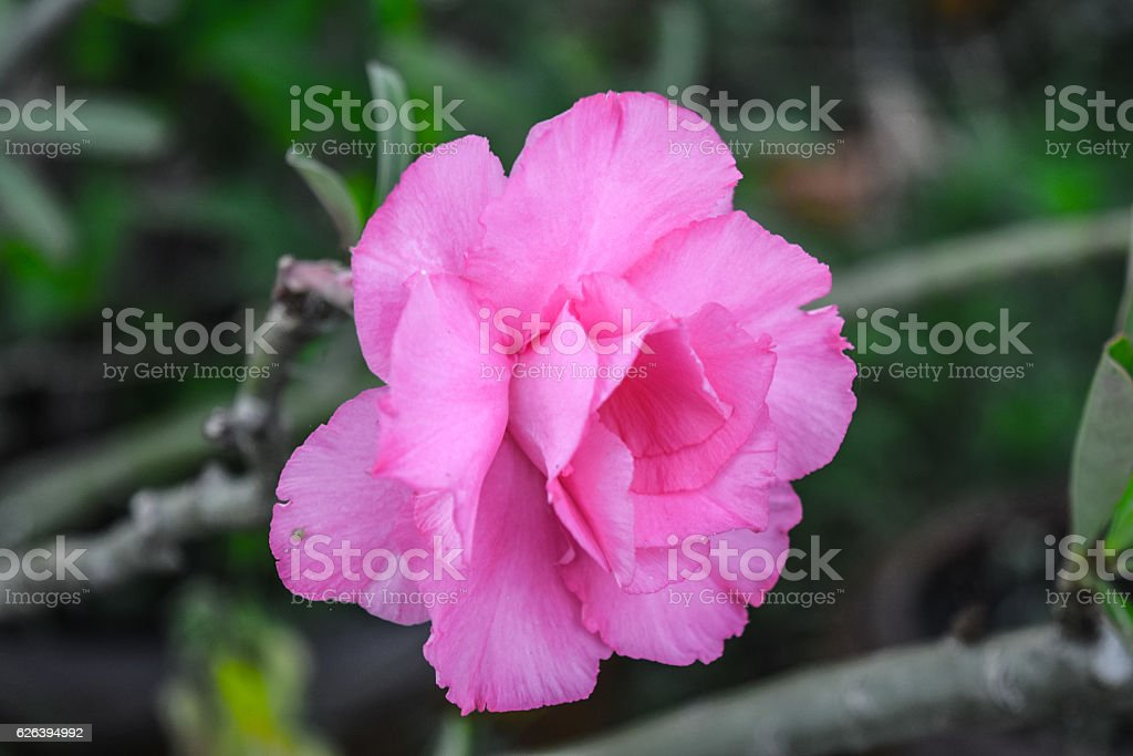 Pink Flower natur stock photo