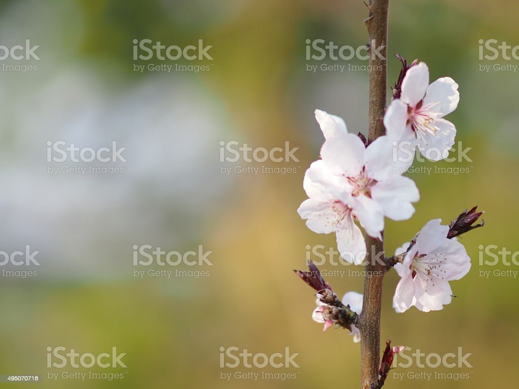 Pink flower on a branch stock photo