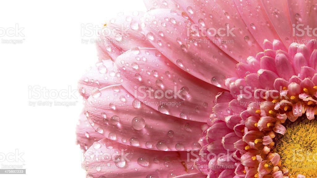 Pink flower petals. stock photo