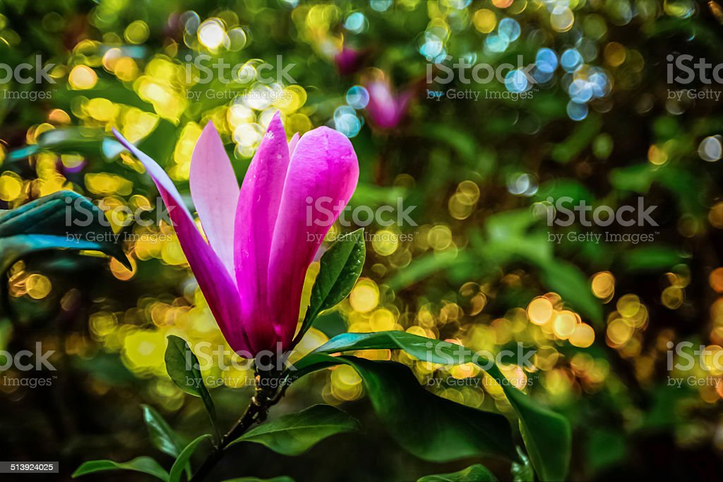 Pink Flower Petals royalty-free stock photo