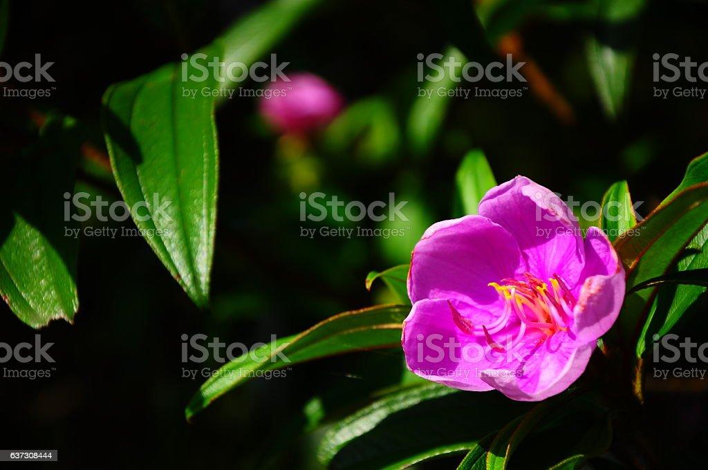 Pink flower. stock photo