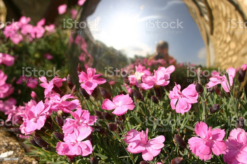 Pink flowers and person reflected in sunglasses stock photo