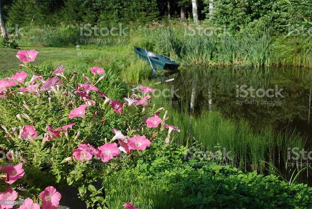 Pink flowers at the pond royalty-free stock photo