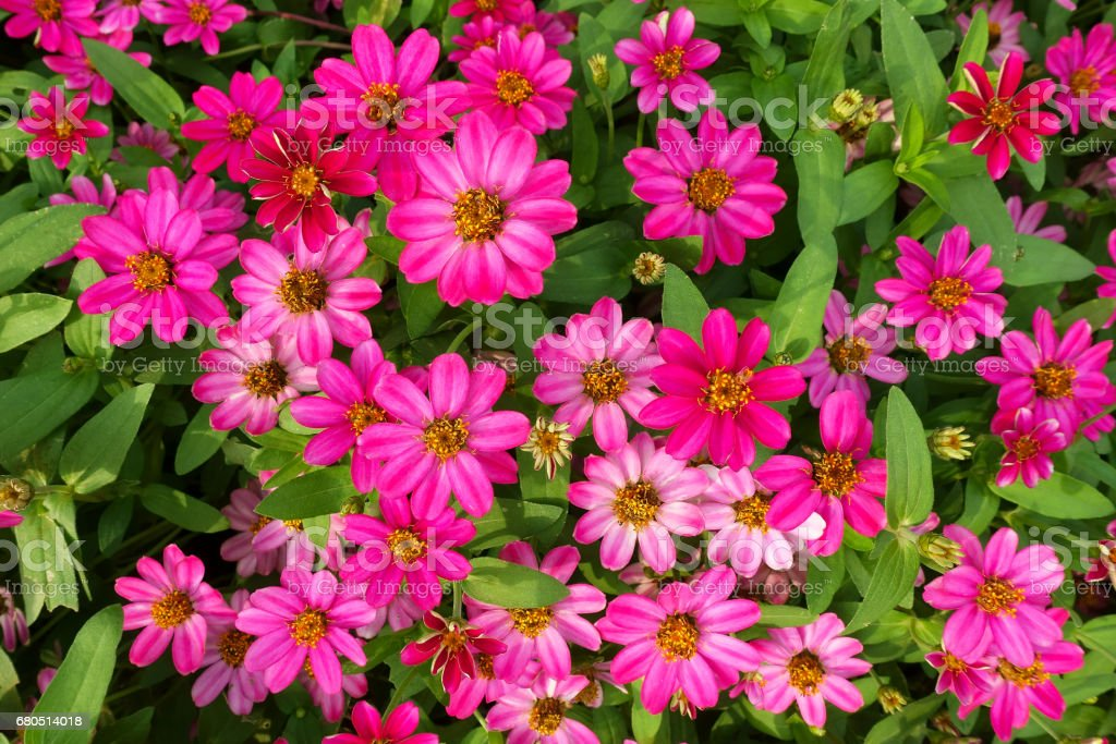 pink flowers backgrounds stock photo
