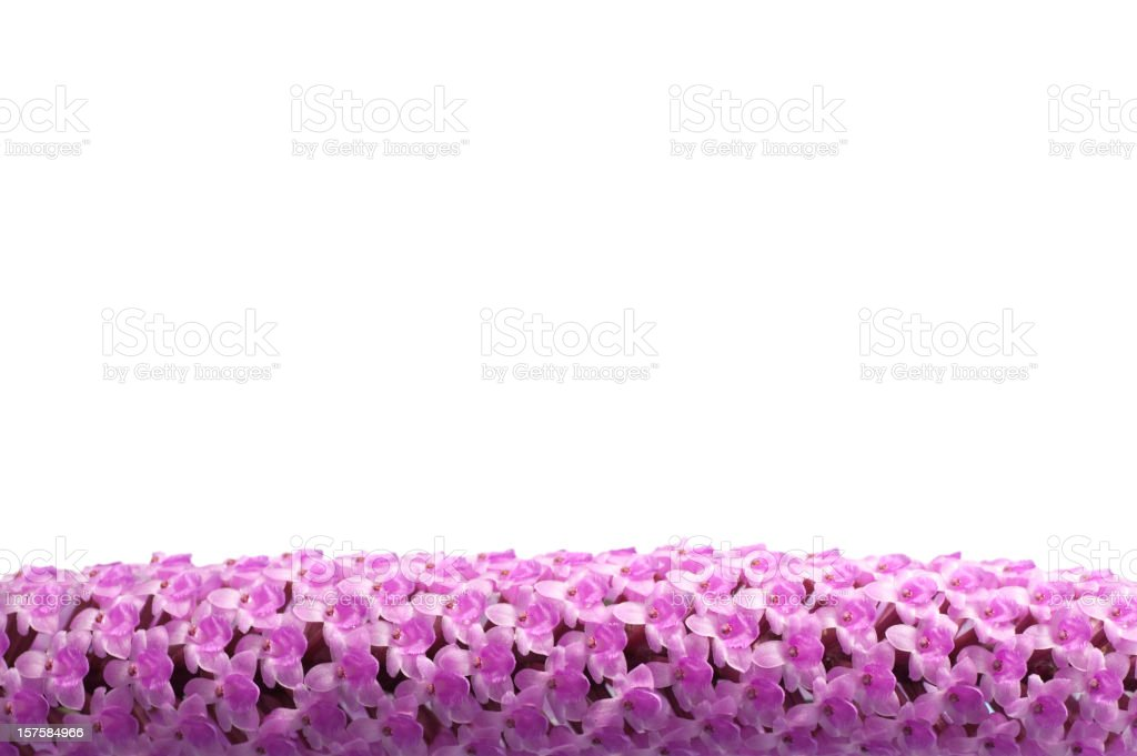 Pink flowers border royalty-free stock photo