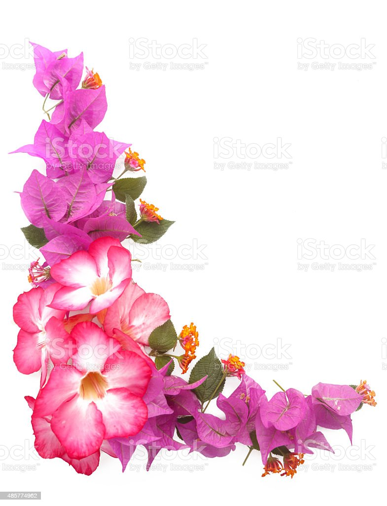 Pink flowers frame isolated white background stock photo