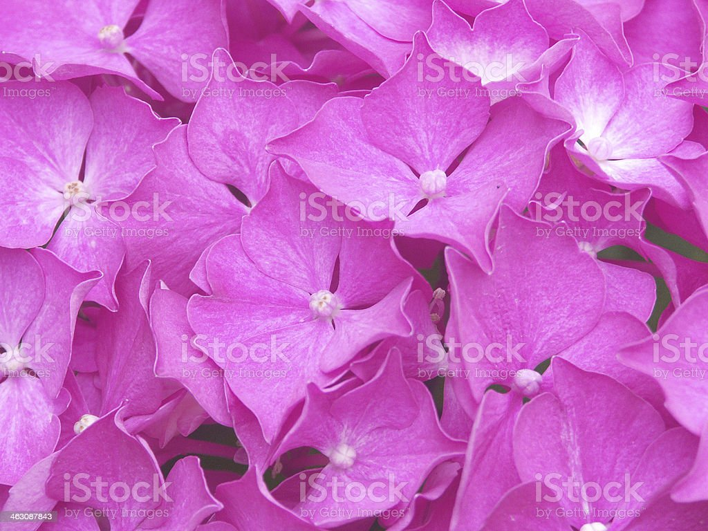 pink flowers in full-frame background stock photo
