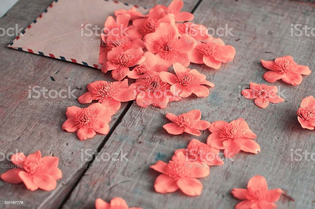 pink flowers in the old envelope stock photo