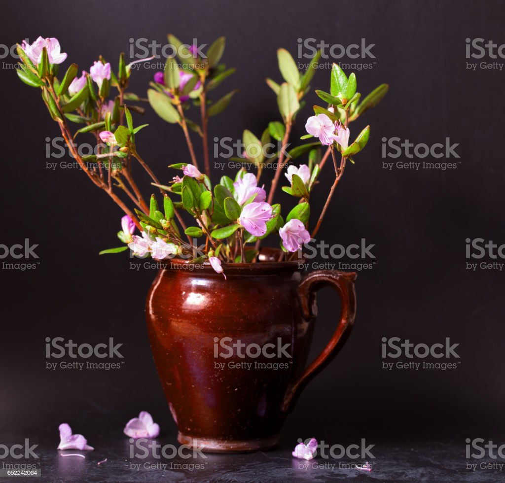 Pink flowers of a Labrador tea on a black vintage background stock photo