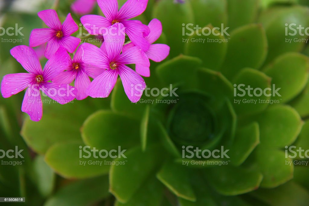 Pink Flowers on Green Leafs stock photo