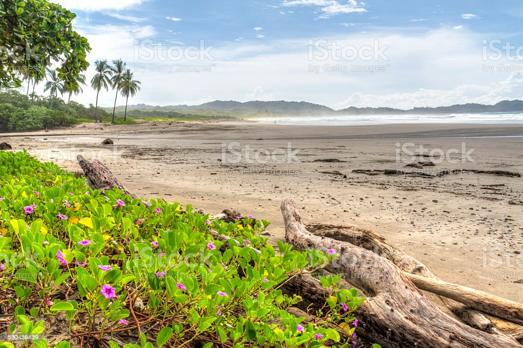 Pink Flowers on Misty Playa Guiones stock photo