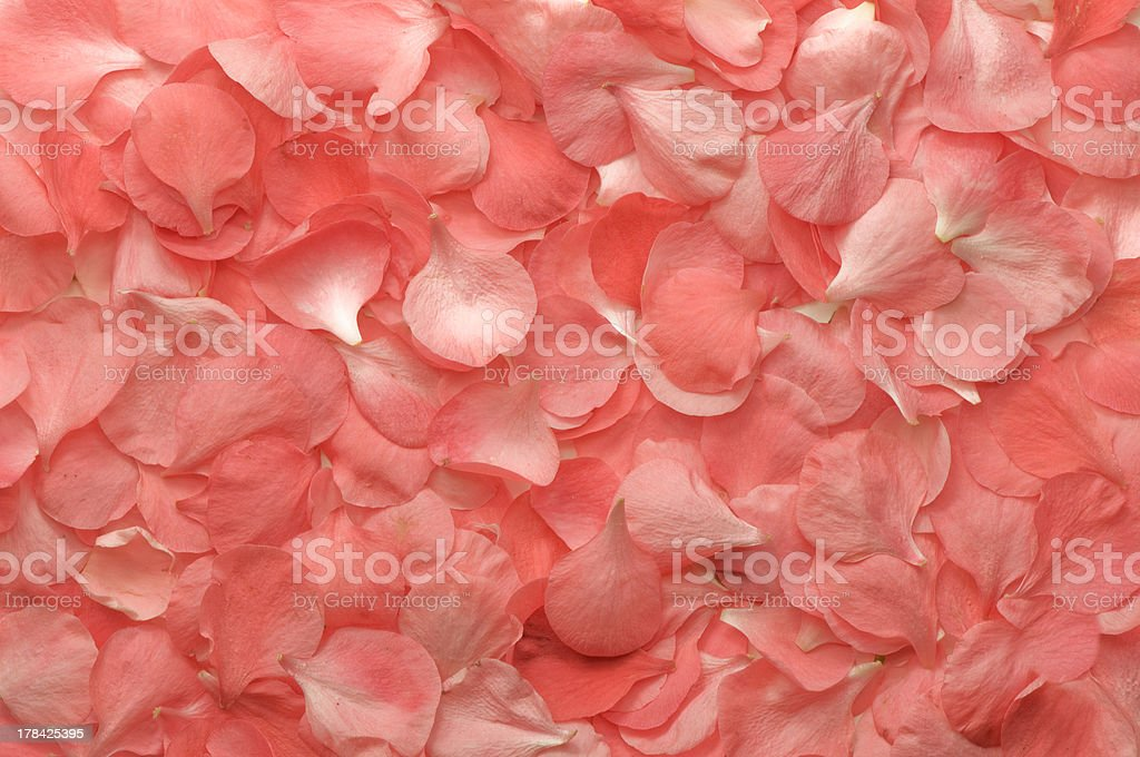 pink flowers petals texture royalty-free stock photo