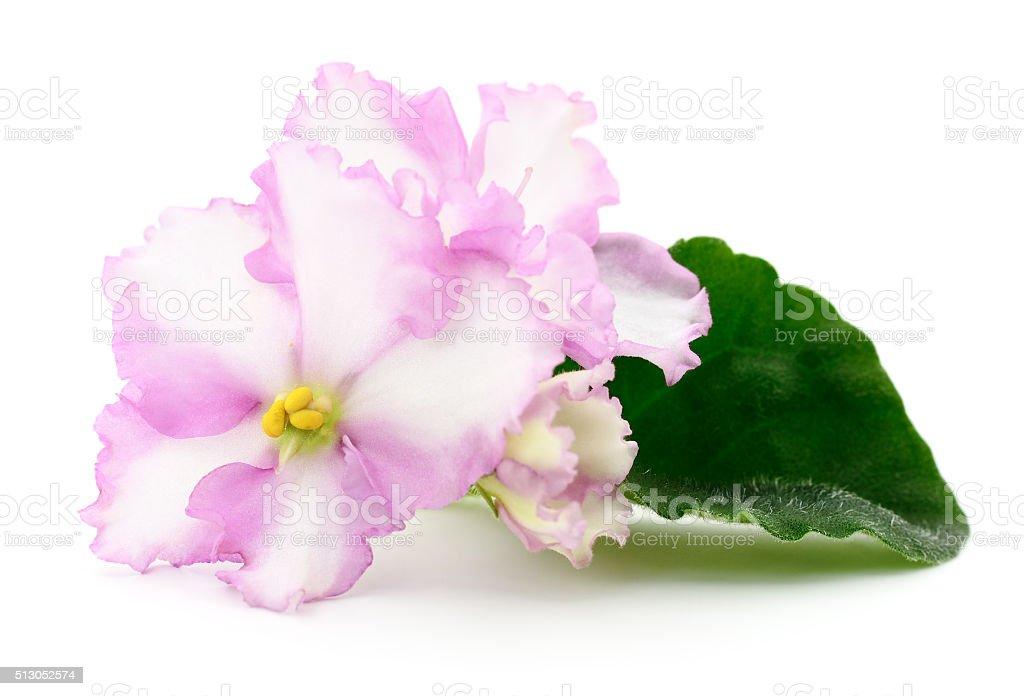 Rosa flores. foto de stock libre de derechos