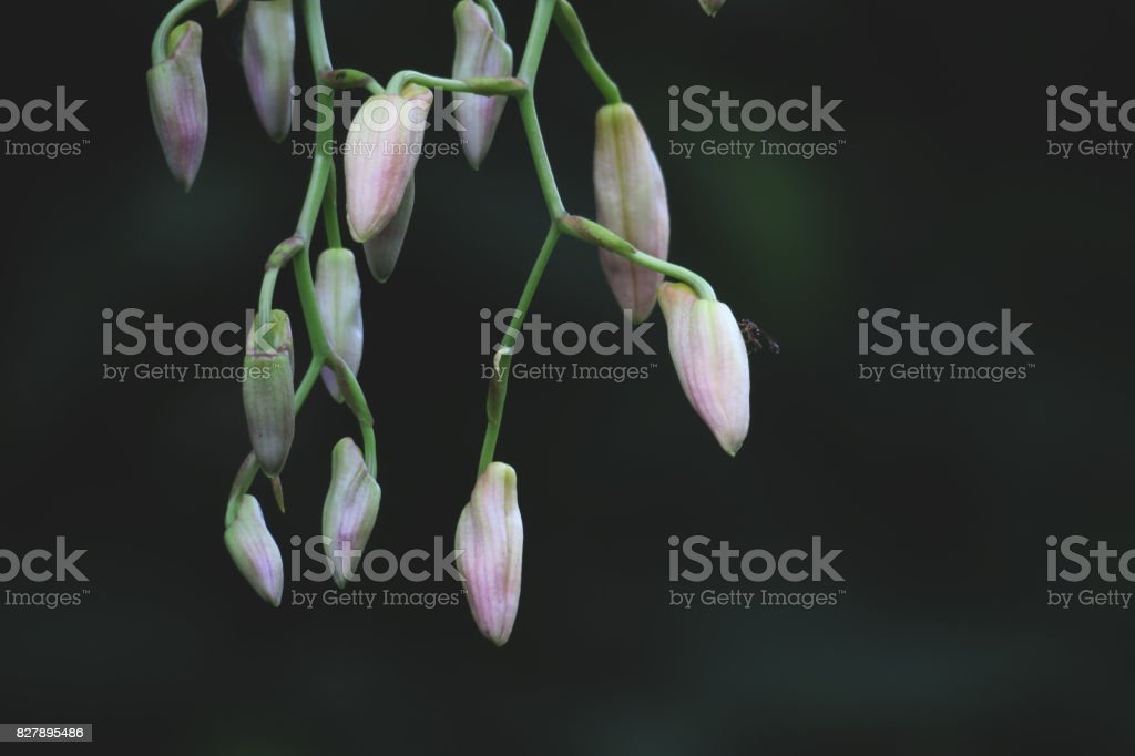 Pink flowers with insect stock photo
