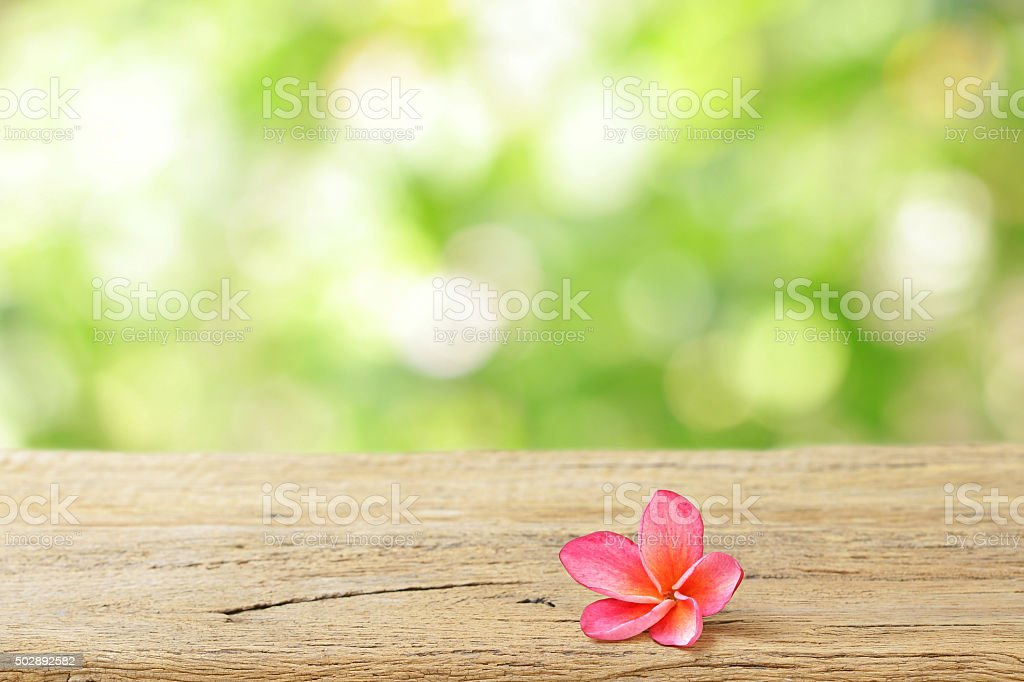 Pink Frangipani flower on wooden table stock photo