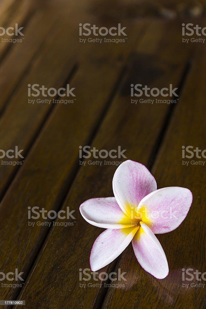 Pink frangipani flowers royalty-free stock photo