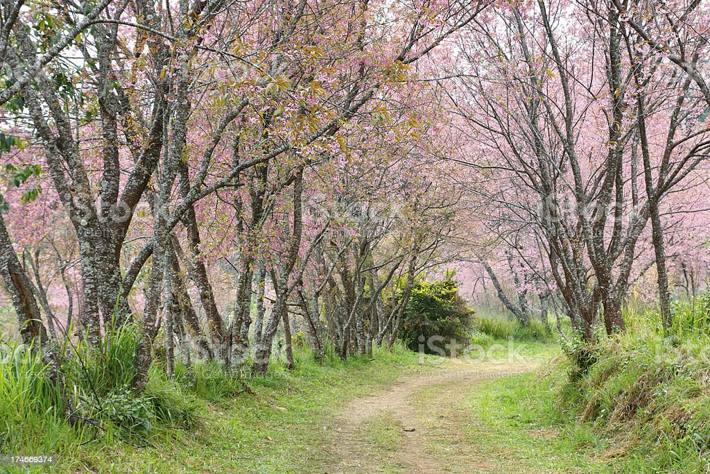 Pink garden royalty-free stock photo