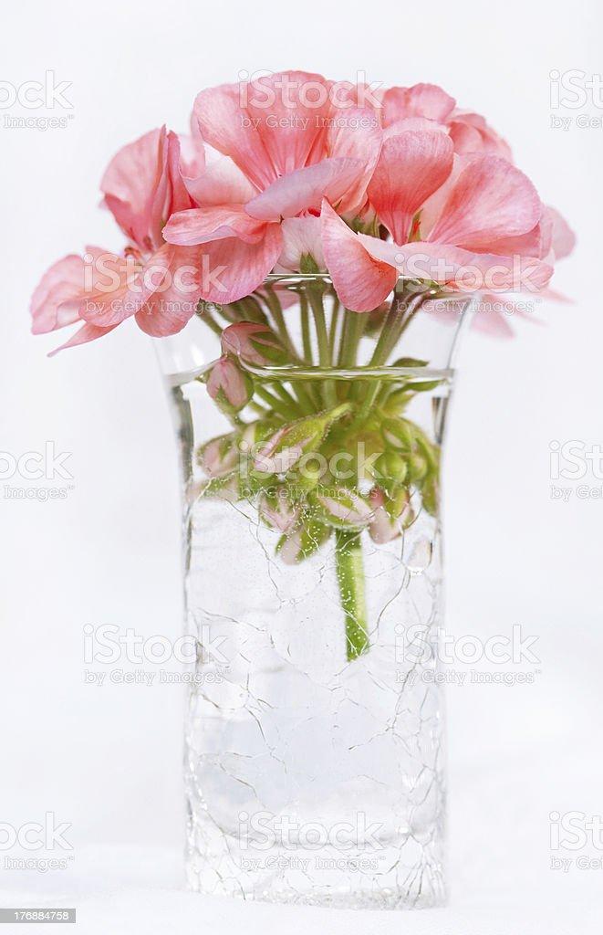 Pink Geranium in Crackled Vase stock photo
