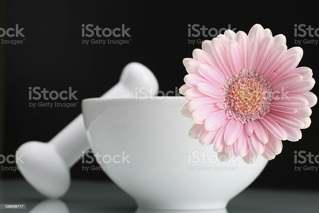 Pink Gerbara in White Vase stock photo